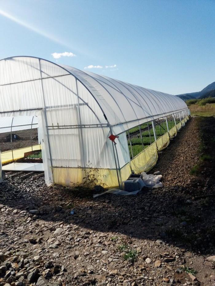 Proiect pilot de producere a puietilor de molid in Harghita