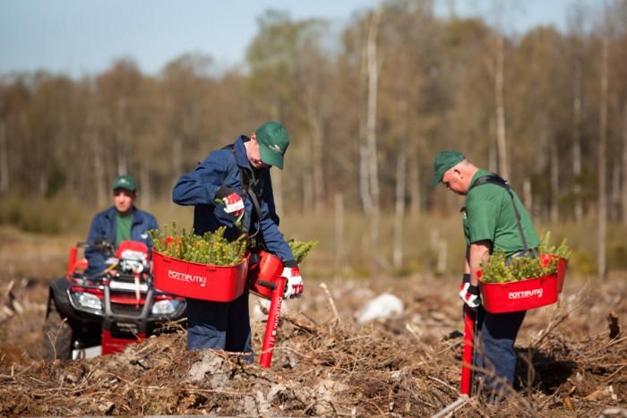plantare puieti forestieri containerizati