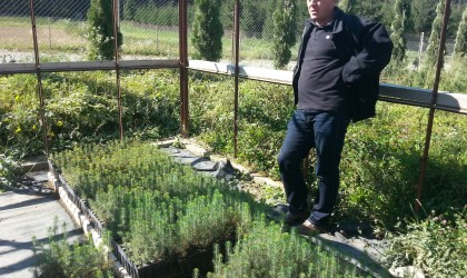 Ocolul Silvic Privat Valea Ilvei producere puieti de molid in container